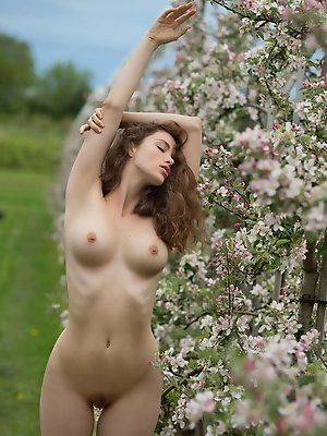 Apple Blossom Vika A.